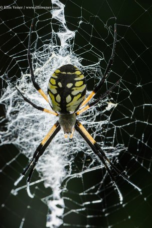 Ellis Vener spider macro photography using the CamRanger