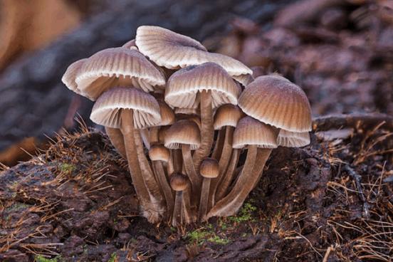 Mushroom macro photography by Edward M