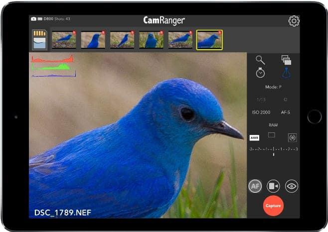 bird iPad trigger