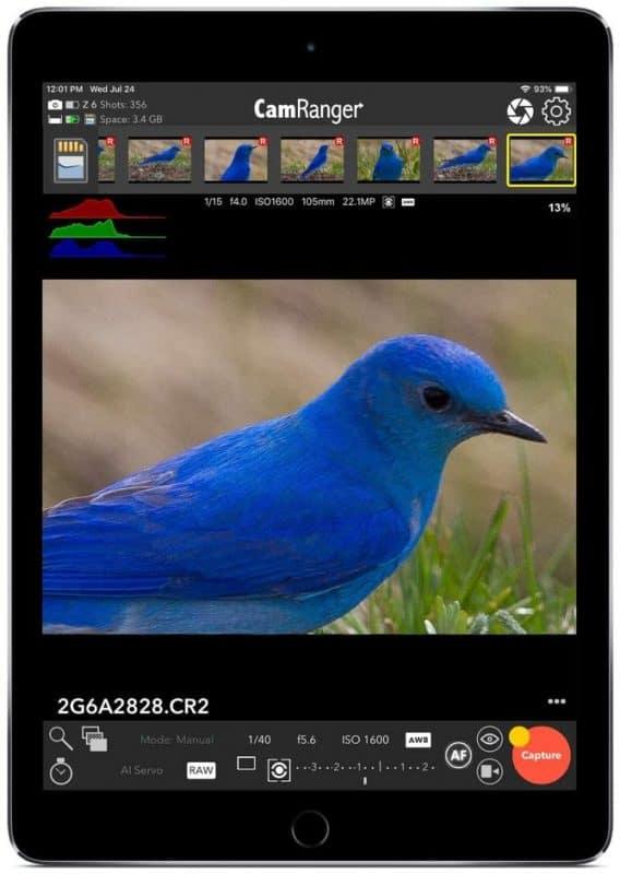 iPad Bird