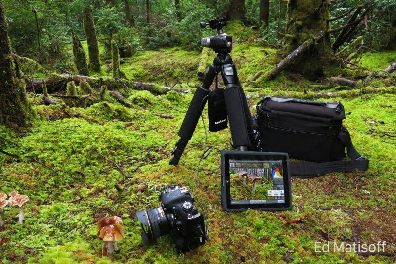 CamRanger Macro Photography Setup
