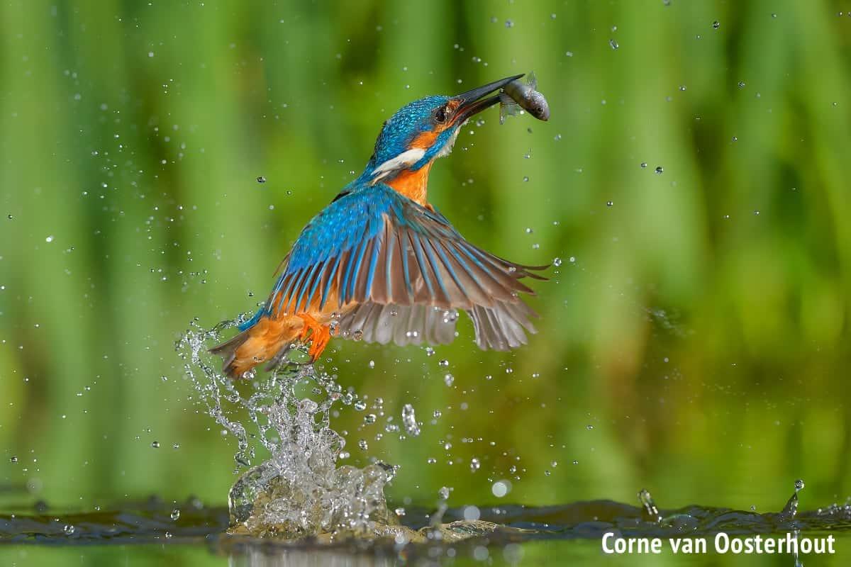 Bird Wildlife Photography