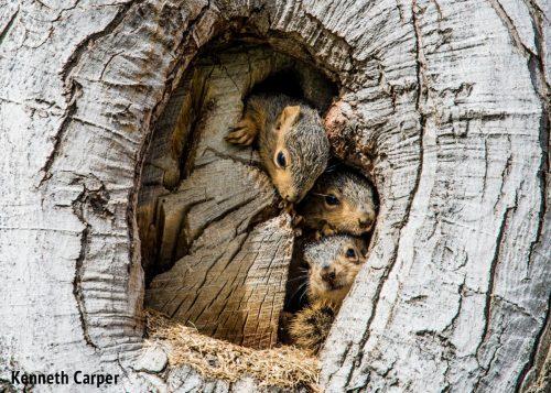 Remote squirrel photography